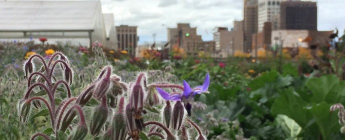 5 Detroit Gardens You Can Volunteer at - Opportunity Detroit Blog