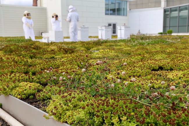 The Buzz About Cobo's Sustainability Efforts - Opportunity Detroit