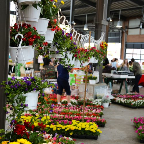 Eastern Market's Flower Day Continues To Grow - Opportunity Detroit Blog