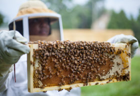 Detroit Hives Turns Vacant Lots Into Something Bee-utiful - Opportunity Detroit