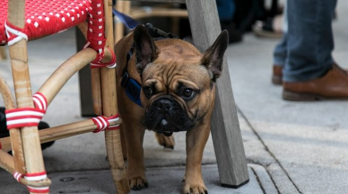 Things To Do In Detroit With Your Dog This Summer – Opportunity Detroit